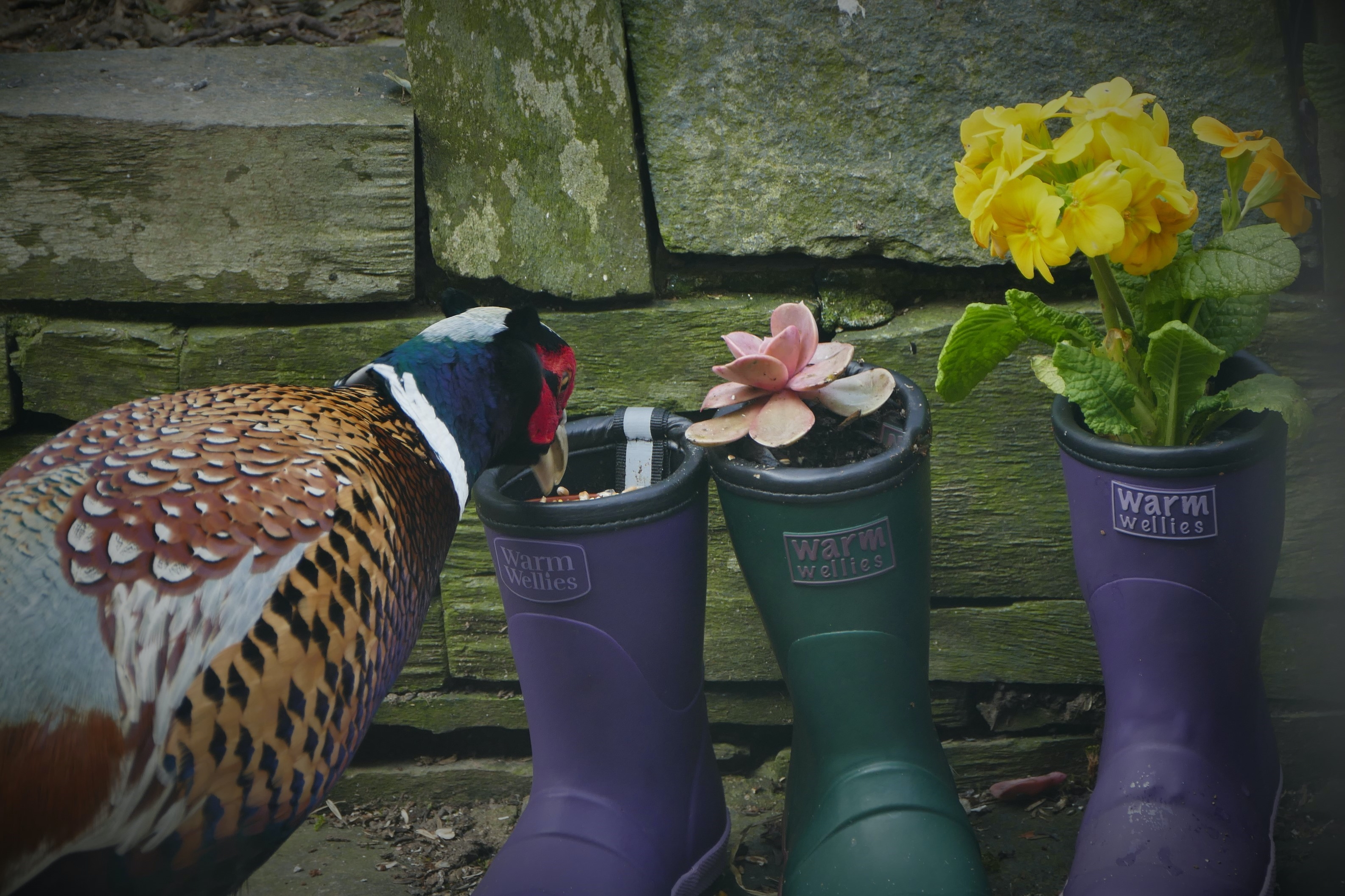 Wellies with flowers in
