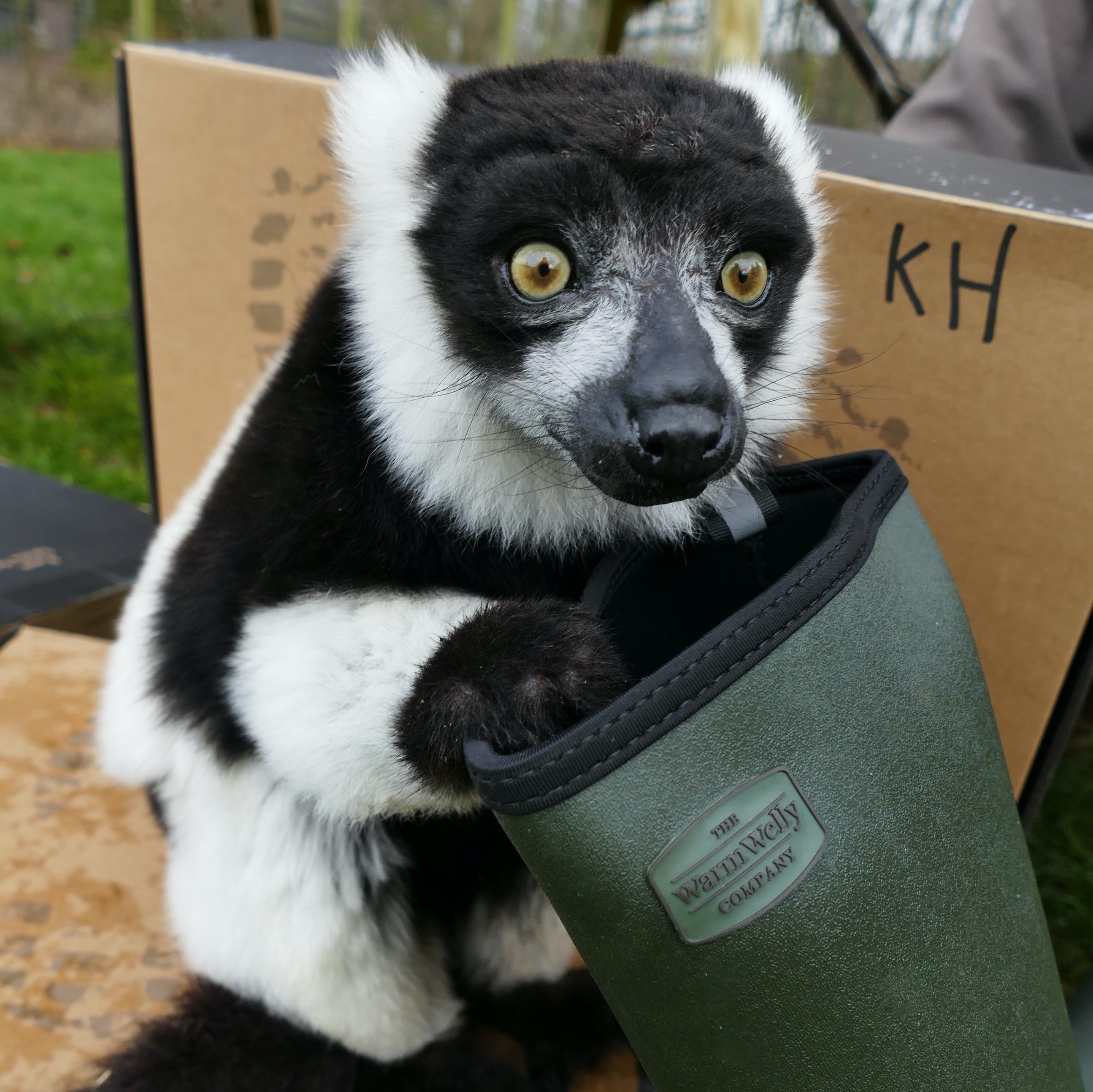 Animal with green wellie